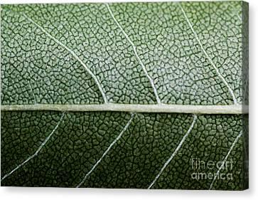 Green Leaf Geometry Canvas Print by Ryan Kelly