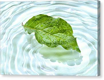 Green Leaf With Water Reflection Canvas Print by Sandra Cunningham