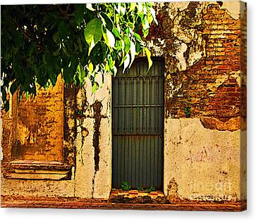 Green Leaves And Wall By Michael Fitzpatrick Canvas Print by Mexicolors Art Photography