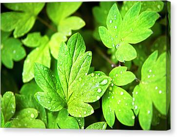 Canvas Print featuring the photograph Green Leaves by Christina Rollo