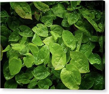 Tropical Beach Canvas Print - Green Leaves by Martin Newman