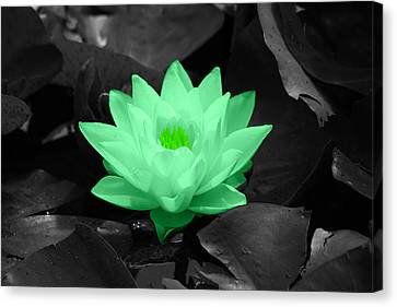 Green Lily Blossom Canvas Print by Shane Bechler