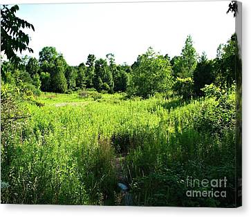 Green Meadow Canvas Print