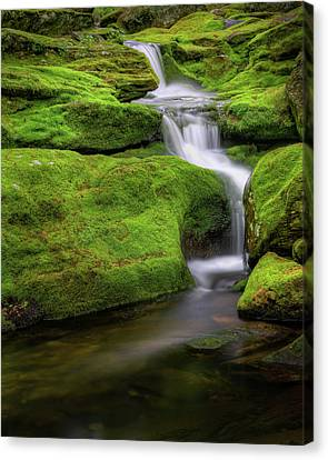 Green Moss Falls Canvas Print by Bill Wakeley