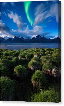 Green Night Canvas Print by Tor-Ivar Naess