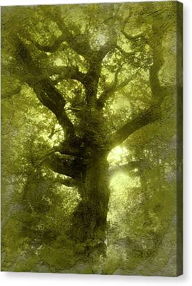 Green Oak Canvas Print by The Rambler