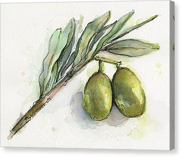 Green Olives On A Branch  Canvas Print