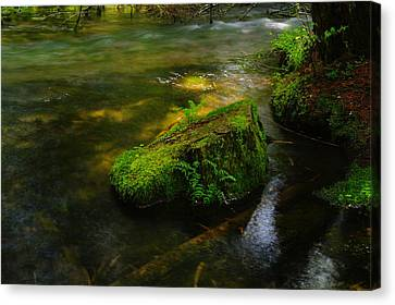 Green On The River Canvas Print by Jeff Swan