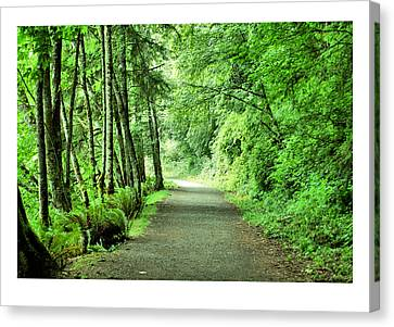 Green Path Canvas Print by J D Banks
