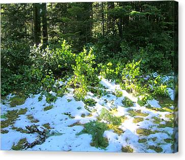 Green Snow Canvas Print
