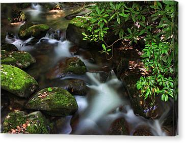 Green Stream Canvas Print