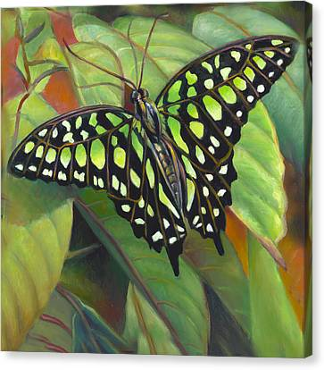 Green Tailed Jay Butterfly Canvas Print