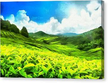 Green Tea Canvas Print by Leonardo Digenio
