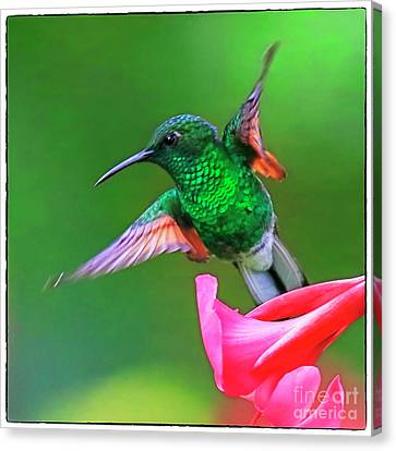 Green Thorntail Canvas Print - Green Thorntail by Edita De Lima