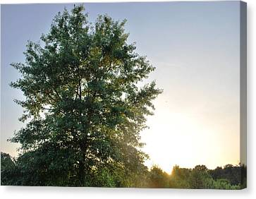 Green Tree Bright Sunshine Background Canvas Print