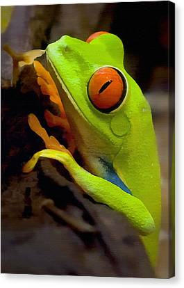 Amphibians Canvas Print - Green Tree Frog by Sharon Foster