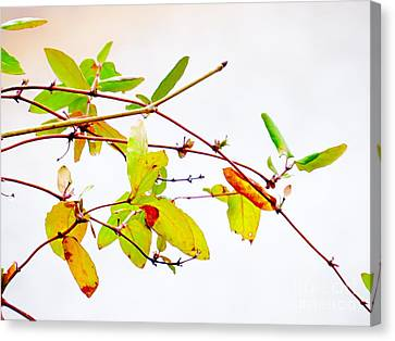 Green Twigs And Leaves Canvas Print