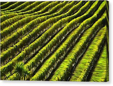 Green Vineyard Field Canvas Print
