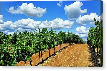 Wine Making Canvas Print - Green Vineyard White Clouds by Daniel Hagerman