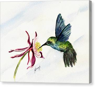 Green Violet-ear Hummingbird Canvas Print by Sam Sidders