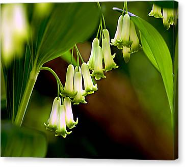 Canvas Print featuring the photograph Green White Bells by JoAnn Lense