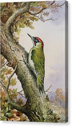 Green Woodpecker Canvas Print by Carl Donner