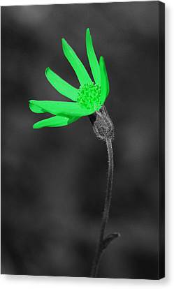 Green9 Canvas Print by Shane Bechler