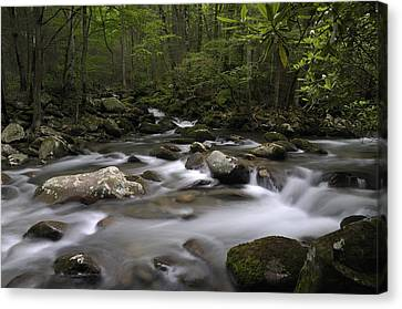 Greenbrier In The Great Smoky Mountains Canvas Print by Darrell Young