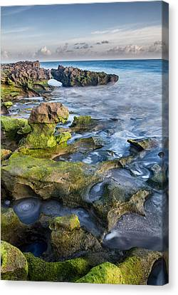 Greenery In Coral Cove Canvas Print by Andres Leon