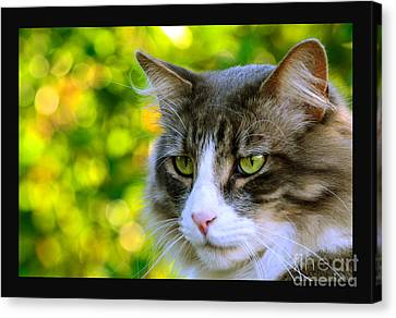Greeneyes In Forest Canvas Print