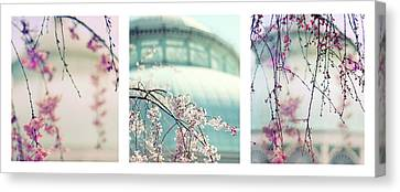 Canvas Print featuring the photograph Greenhouse Blossoms Triptych by Jessica Jenney
