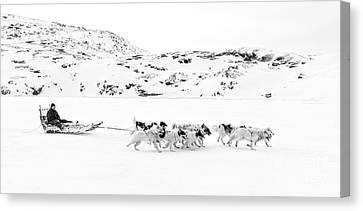 Husky Canvas Print - On The Trail To Home by Janet Burdon