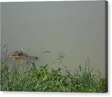 Greenwood Gator Farm Canvas Print by Cynthia Powell