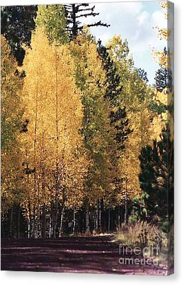 Canvas Print featuring the photograph Greer Arizona Aspen Trees by Juls Adams
