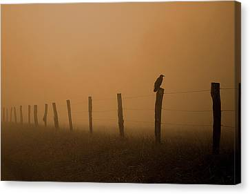 Fence Row Canvas Print - Greeting The Morning by Michael Eingle