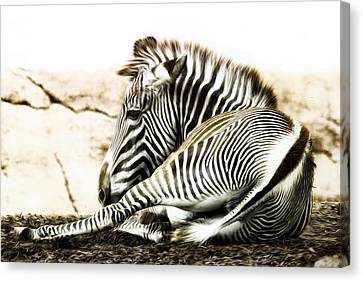 Grevy's Zebra Canvas Print by Bill Tiepelman
