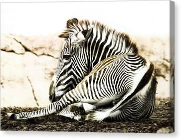 Grevy's Zebra Canvas Print by Bill Tiepelman