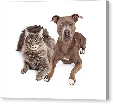 Grey Cat And Dog Laying Together Canvas Print