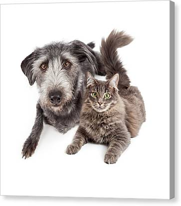 Grey Dog And Cat Laying Closely Together Canvas Print by Susan Schmitz