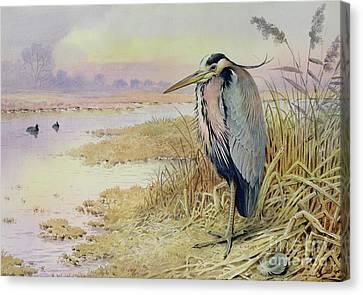 Heron Canvas Print - Grey Heron by John James Audubon