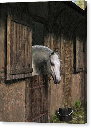 Grey Horse In The Stable - Waiting For Dinner Canvas Print by Jayne Wilson