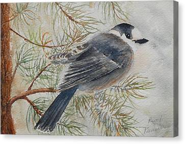Grey Jay Canvas Print by Ruth Kamenev