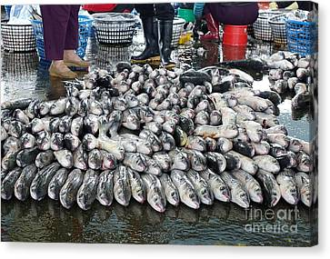 Canvas Print featuring the photograph Grey Mullet Fish For Sale At The Fish Market by Yali Shi