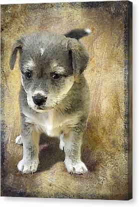 Doggy Cards Canvas Print - Grey Puppy by Svetlana Sewell