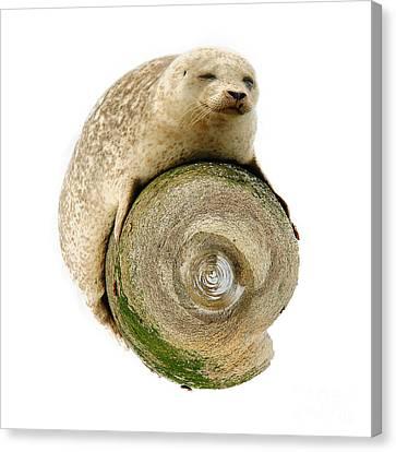 Grey Seal World Canvas Print by Nichola Denny