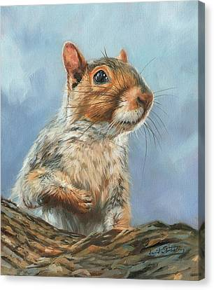 Canvas Print featuring the painting Grey Squirrel by David Stribbling