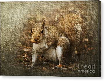 Grey Squirrel Canvas Print by Steve Purnell