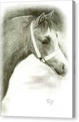 Grey Welsh Pony  Canvas Print
