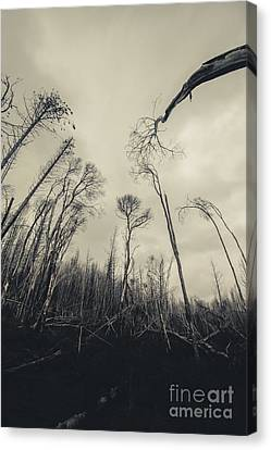 Sombre Canvas Print - Grey Winds Bellow  by Jorgo Photography - Wall Art Gallery