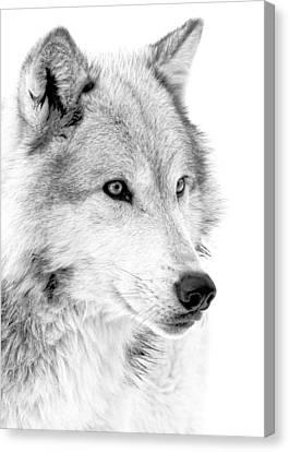 Grey Wolf Profile Canvas Print by Athena Mckinzie